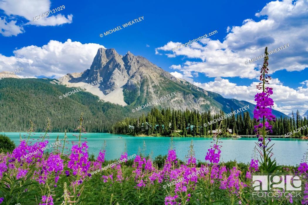 Stock Photo: Fireweed, Emerald Lake, Yoho National Park, British Columbia, Canada.