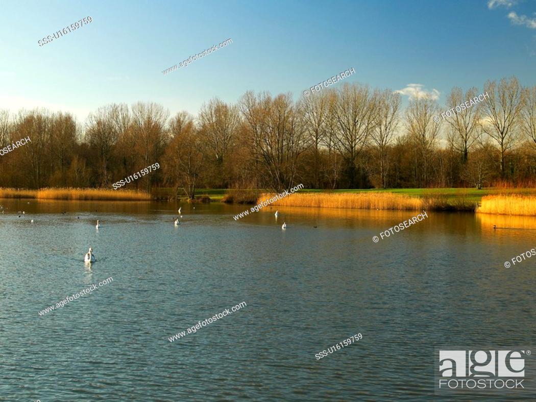 Stock Photo: Willen Lake, Milton Keynes, Midland, UK.