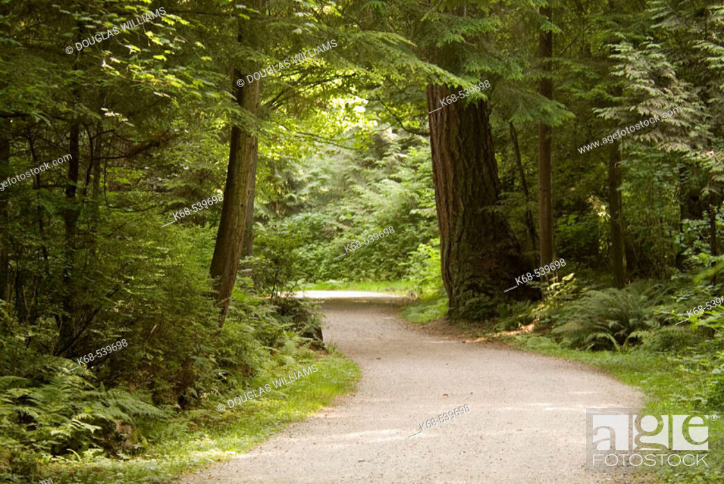 Imagen: Path in Stanley Park, Vancouver, BC, Canada.