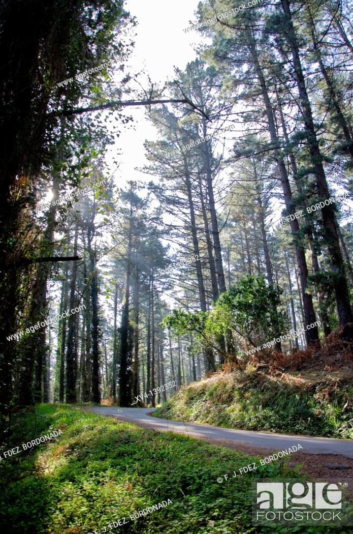 Stock Photo: Matxitxako forest near of Bermeo village  Biscay  Basque Country, Spain  Europe.