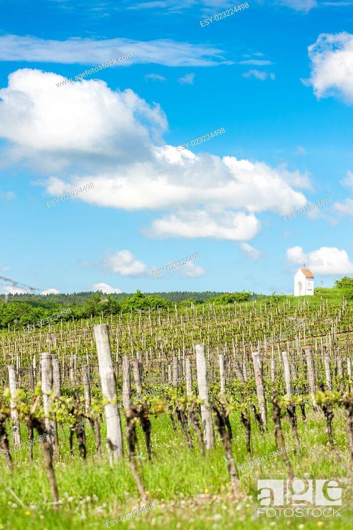 Stock Photo: spring vineyard near Hnanice, Southern Moravia, Czech Republic.