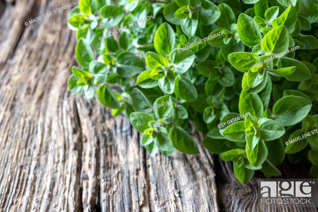 Stock Photo: Fresh oregano twigs on a rustic wooden background, selective focus.