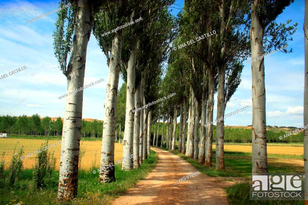 Stock Photo: Country walk in Palencia, Castile province, Spain.