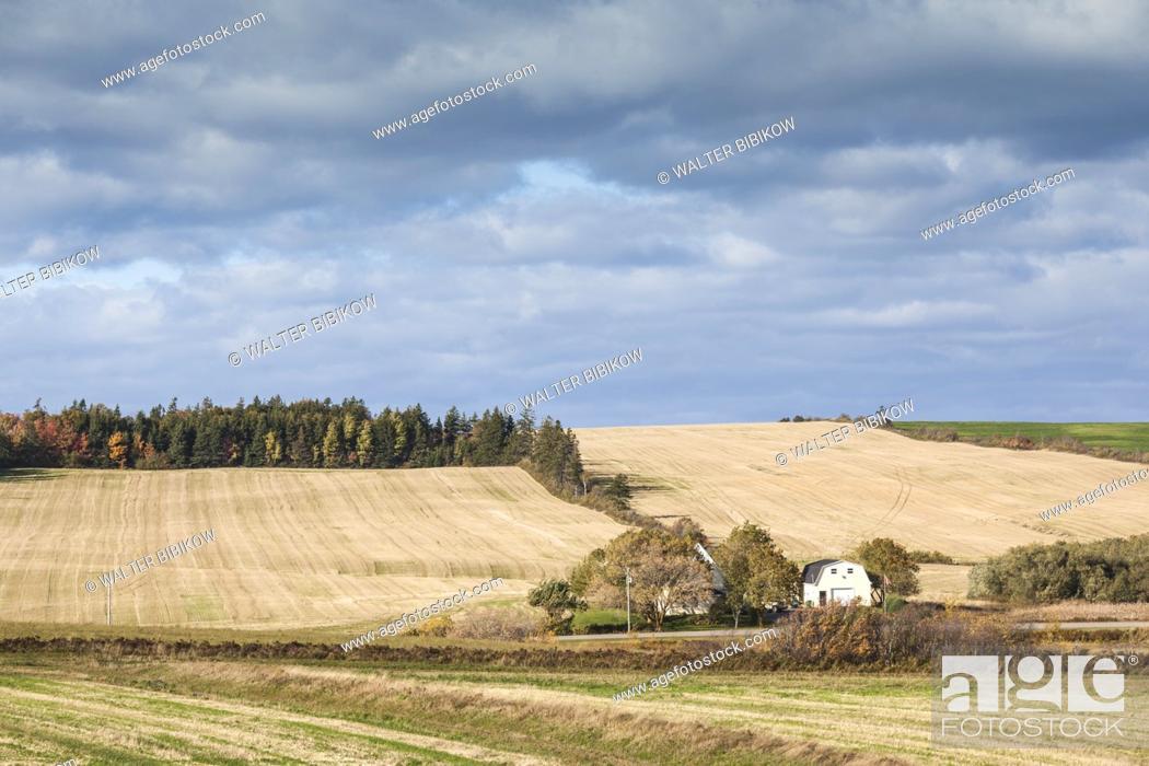 Stock Photo: Canada, Prince Edward Island, French River, farm, autumn.