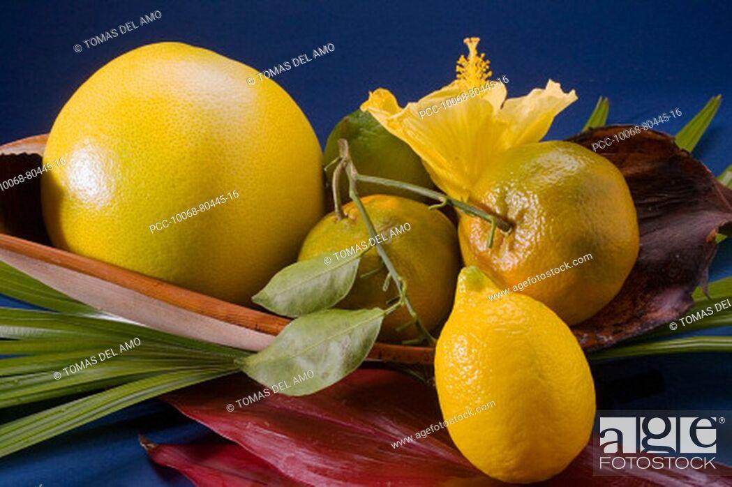 Stock Photo: Studio shot of a variety of citrus fruit.