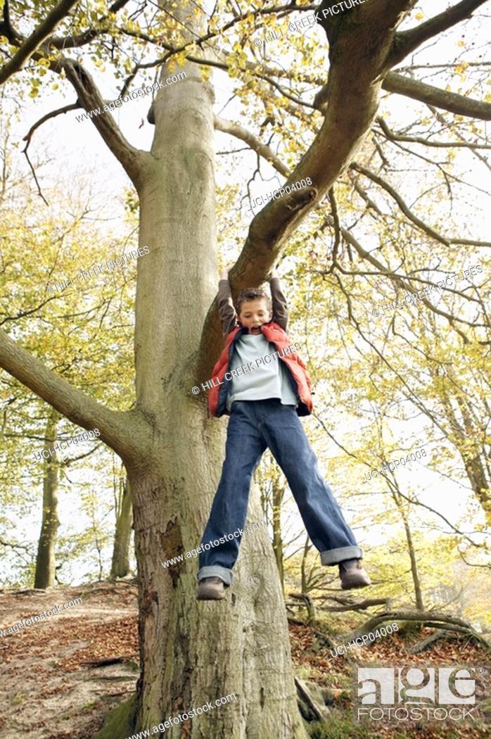 Stock Photo: Boy playing on tree.