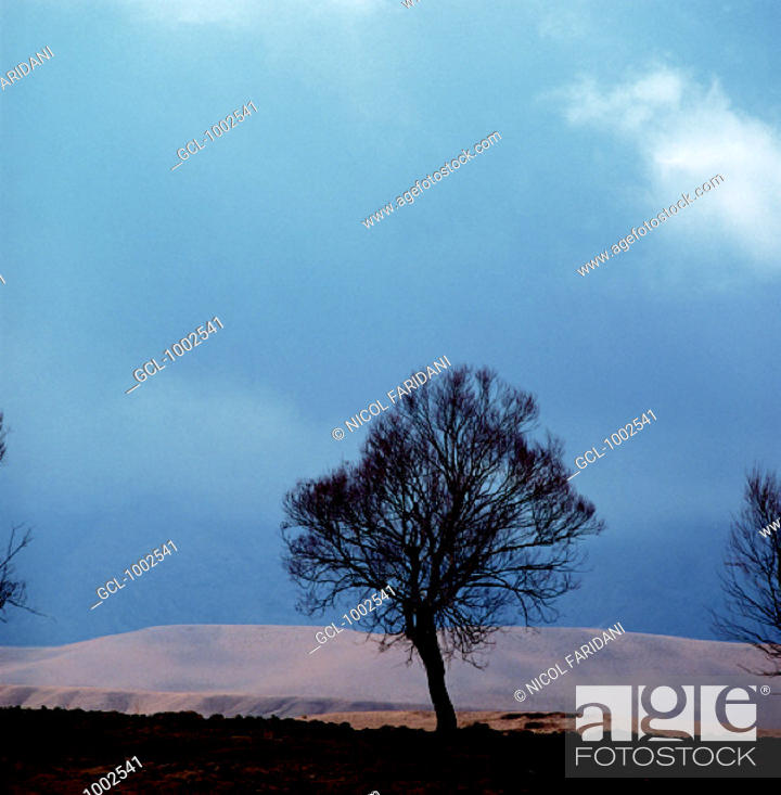 Stock Photo: Leafless trees in Iranian mountains.