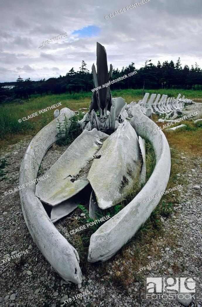 Stock Photo: Whale-Skeleton, Anticosti, Québec, Canada.