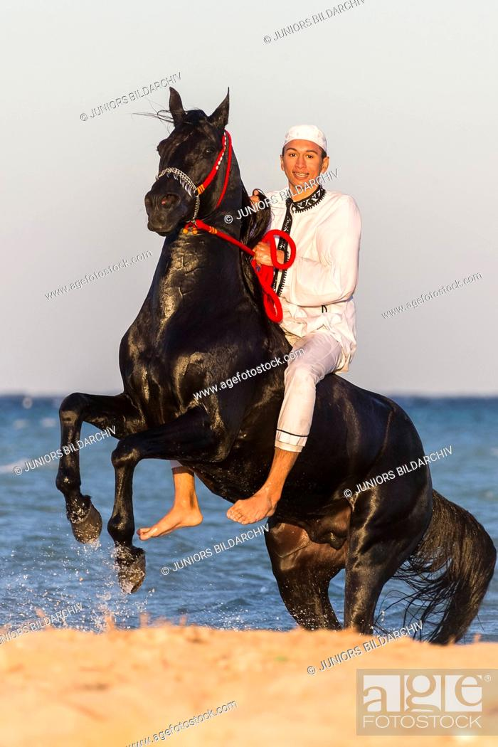 Arabian Horse Rider On Black Stallion Rearing On A Beach Egypt Stock Photo Picture And Rights Managed Image Pic Ssj H 81069470 Agefotostock