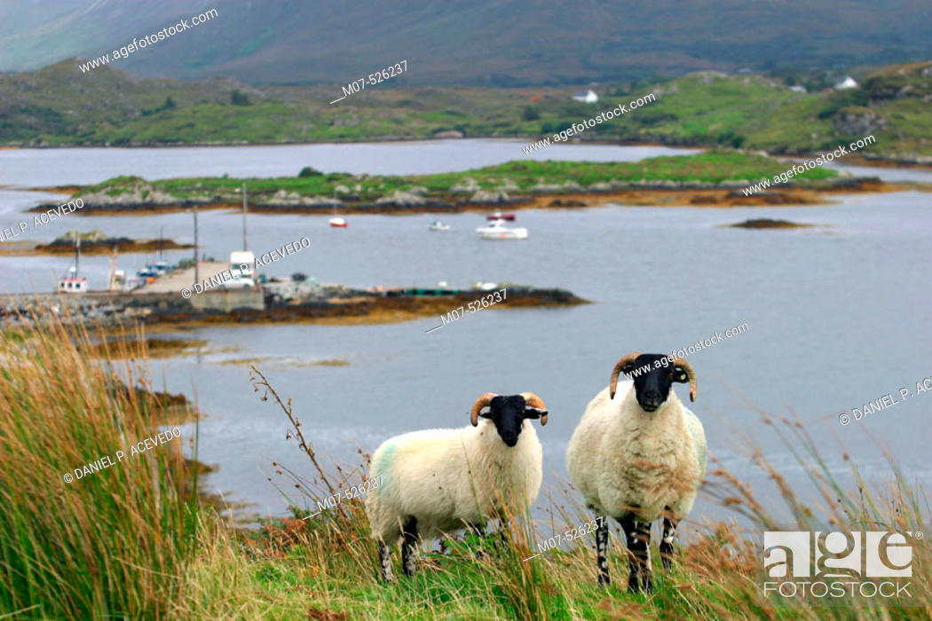 Stock Photo: Letterfrack area. Connemara. Ireland.