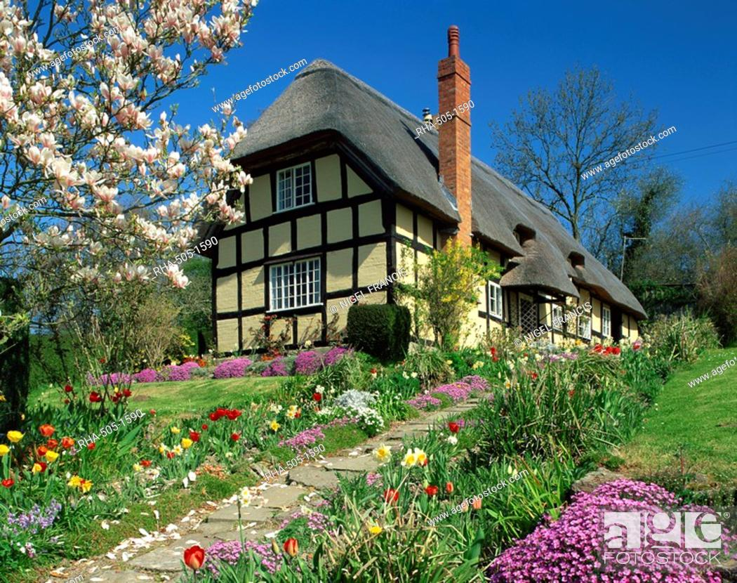 Timber Framed Thatched Cottage And Garden With Spring Flowers At