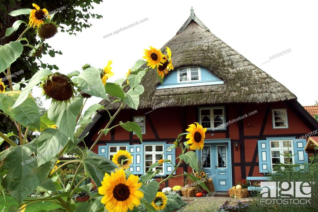 Stock Photo: Geography, Darss, Fischland, Touristic, Pomerania, Picturesque, Mecklenburg, Wustrow, Helianthus, Paste, Vacation, Comfortable, Romantic, Travel, House, Tourism, Building, Village, Germany, Nostalgia, Sunflower, Western
