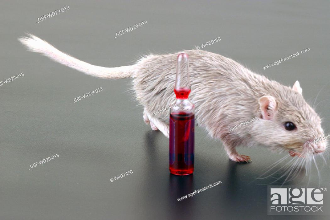 Stock Photo: Medicine, laboratory test.