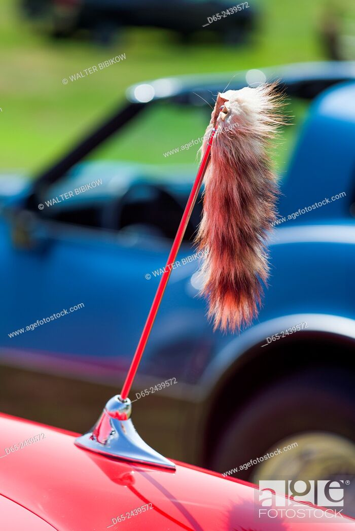 Stock Photo: USA, Massachusetts, Cape Ann, Gloucester, Antique Car Show, 1960s-era, tiger tail attached to car antenna.