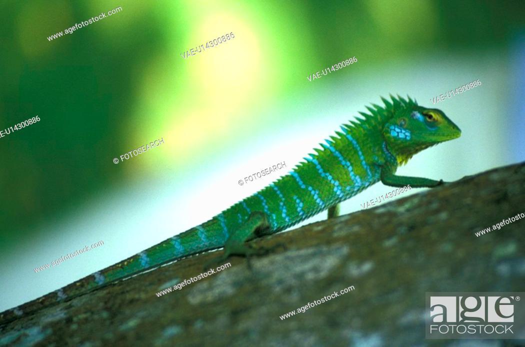 Stock Photo: animals, Asia, asia, aichner.