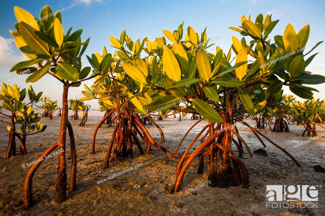 Imagen: Isla Blanca, Quintana Roo. México.