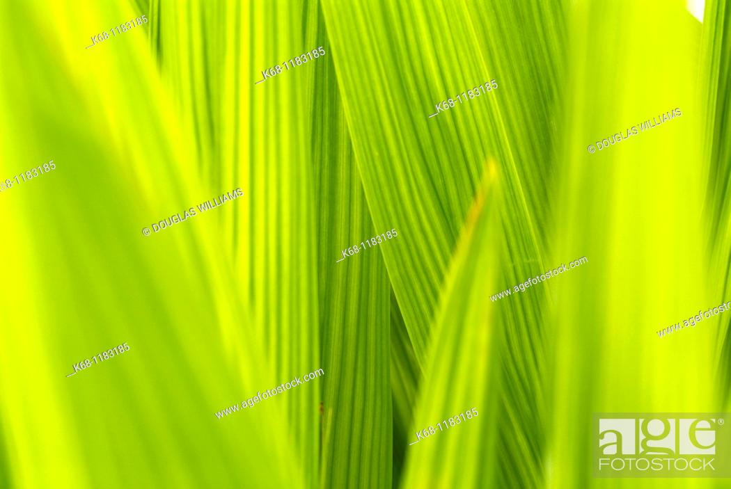 Stock Photo: Plant.