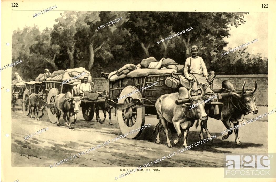 Stock Photo: Bullock Train in India, by Australian artist J. Macfarlane. J Macfarlane was a late colonial period painter, political cartoonist and illustrator.