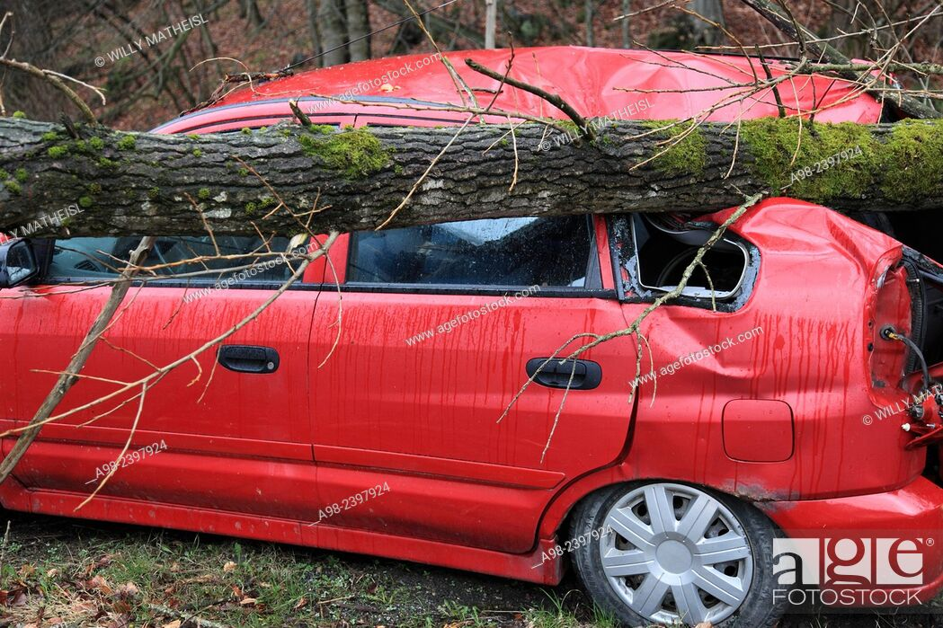 Imagen: Tree crushed onto a parking car in Hurricane Niklas on March 31, 2015, Bavaria, Germany, Europe.