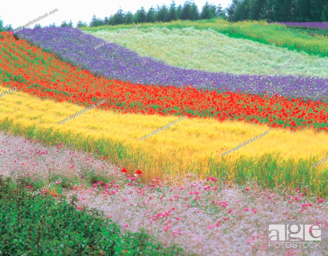 Stock Photo: flowers, landscape, flower, plants, plant, scenery.
