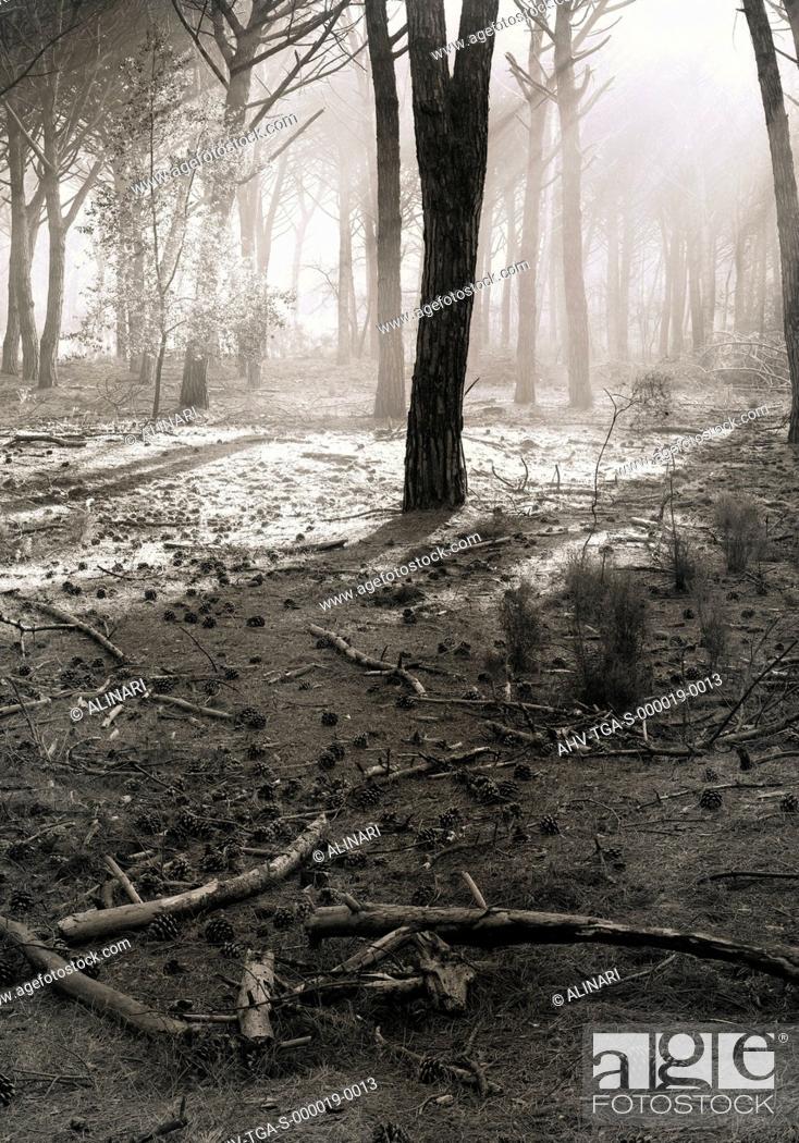 Imagen: S.Rossore. Pine wood of via Prini, shot 1993 by Tatge, George for Alinari.