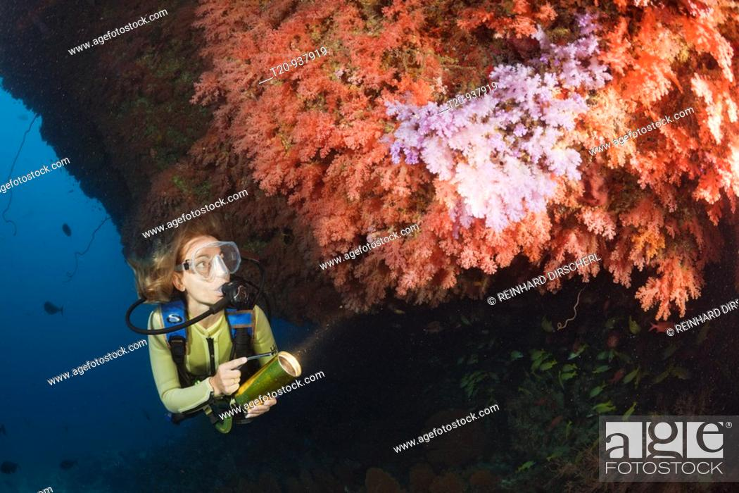 Stock Photo: Diver and Soft Coral Reef, Cironephthya sp , Himendhoo Thila, North Ari Atoll, Maldives.