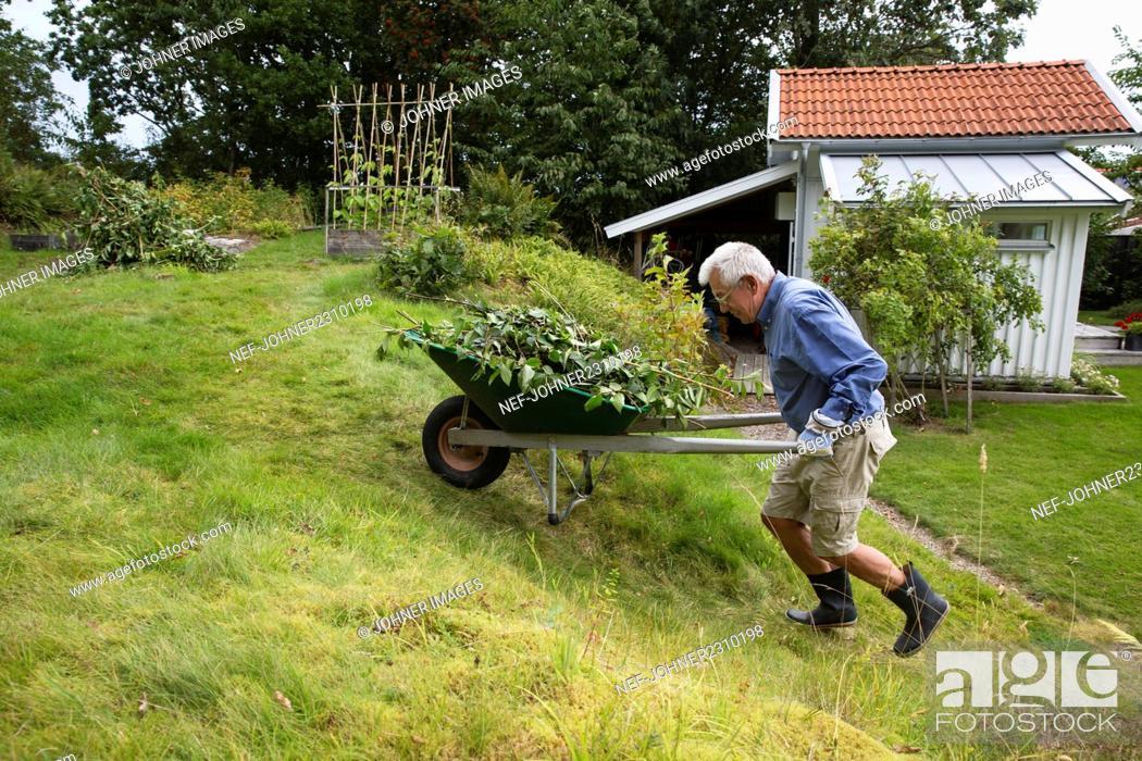 Stock Photo: Man pushing wheelbarrow in garden.