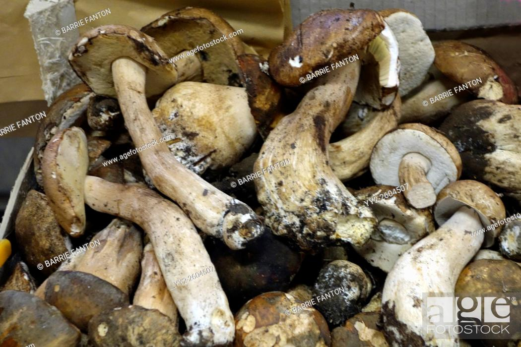 Imagen: Mushrooms, Mercato Centrale, Florence, Italy.