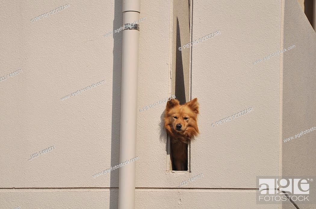 Stock Photo: Naha (Japan): funny dog on a balcony.