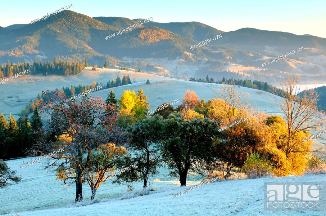 Stock Photo: Frosty morning, Krasnik village area, Carpathian Mountains, Ivano-Frankivsk region, Ukraine.