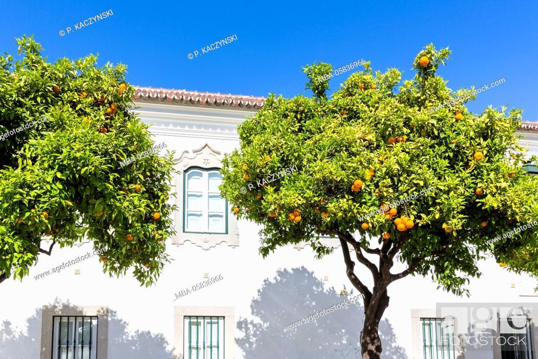 Stock Photo: Orange trees in front of the Paço Episcopal, the episcopal palace, on the Square Largo da Sé, Faro, Algarve, Portugal.