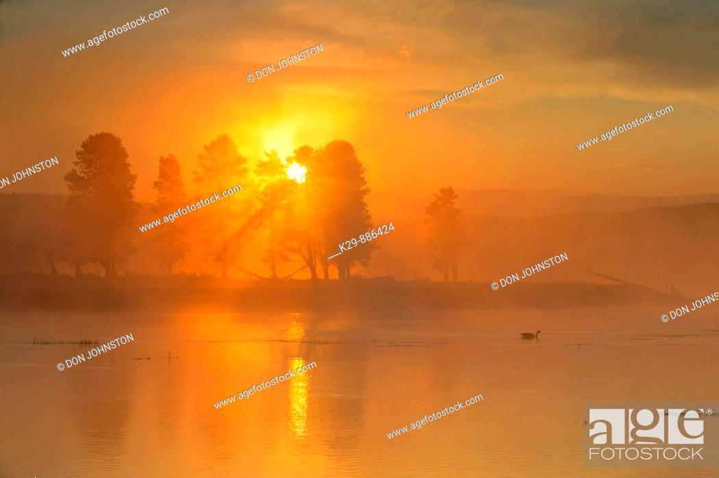 Stock Photo: Fog on the Yellowstone River, with loafing Canada goose at sunrise.