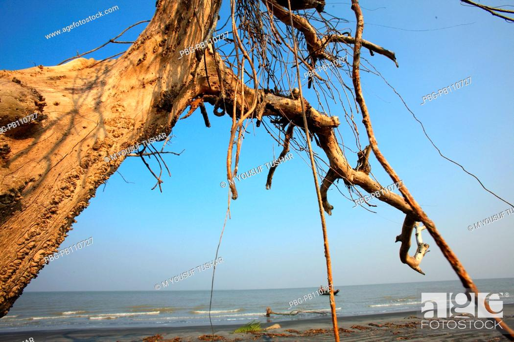 Stock Photo: The Sundarbans, aftermath of cyclone Aila, a UNESCO World Heritage Site and a wildlife sanctuary The largest littoral mangrove forest in the world.