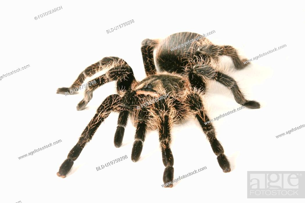 Stock Photo: close-up, animals, CLOSE, black, araneae, alfred.