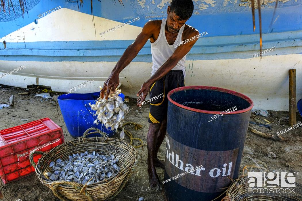 Stock Photo: Talaimannar, Sri Lanka - February 2020: Fisherman drying fish on the beach on February 26, 2020 in Talaimannar, Sri Lanka.