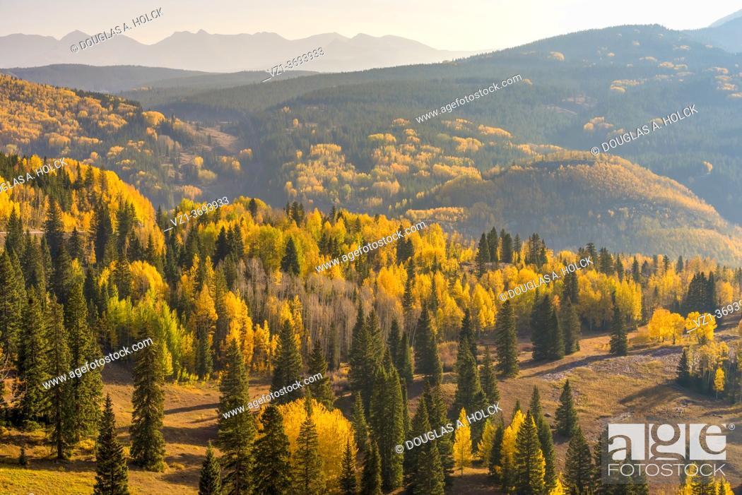 Imagen: Golden Forest San Juan Mountains Ouray CO USA.