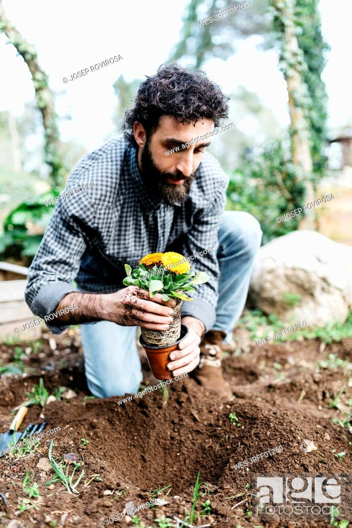 Stock Photo: Man planting flowers in his garden.