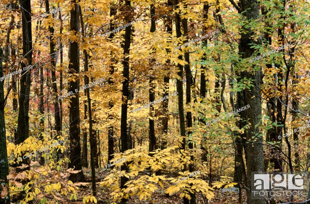 Stock Photo: Trees in fall. Shenandoah National Park, Virginia, USA.