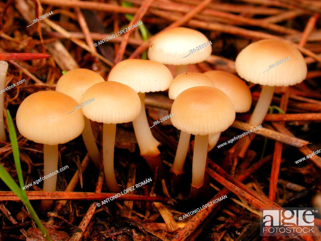 Stock Photo: Fungi.