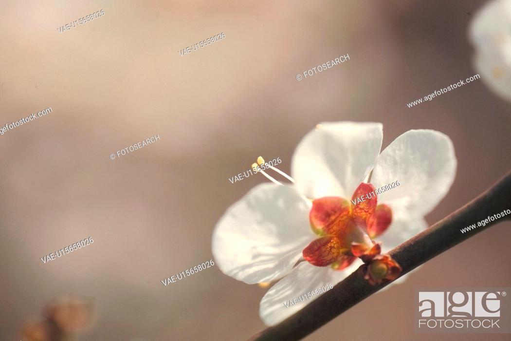 Stock Photo: blossom, plants, bloom, flowers, flower, plant.