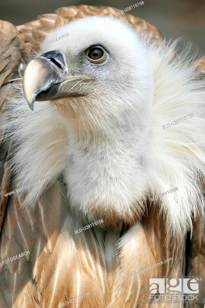 Stock Photo: animals, bill, beak, aves, alfred.