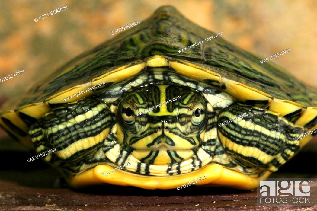 Stock Photo: animals, close-up, CLOSE, body, alfred.
