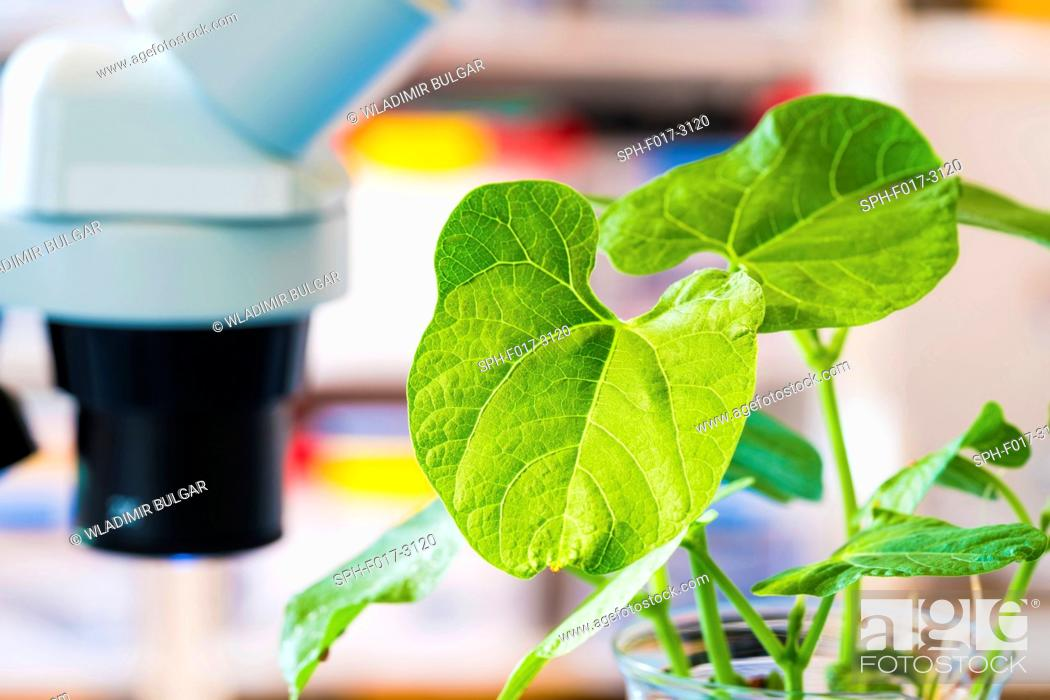 Stock Photo: Plant in the laboratory, close up.