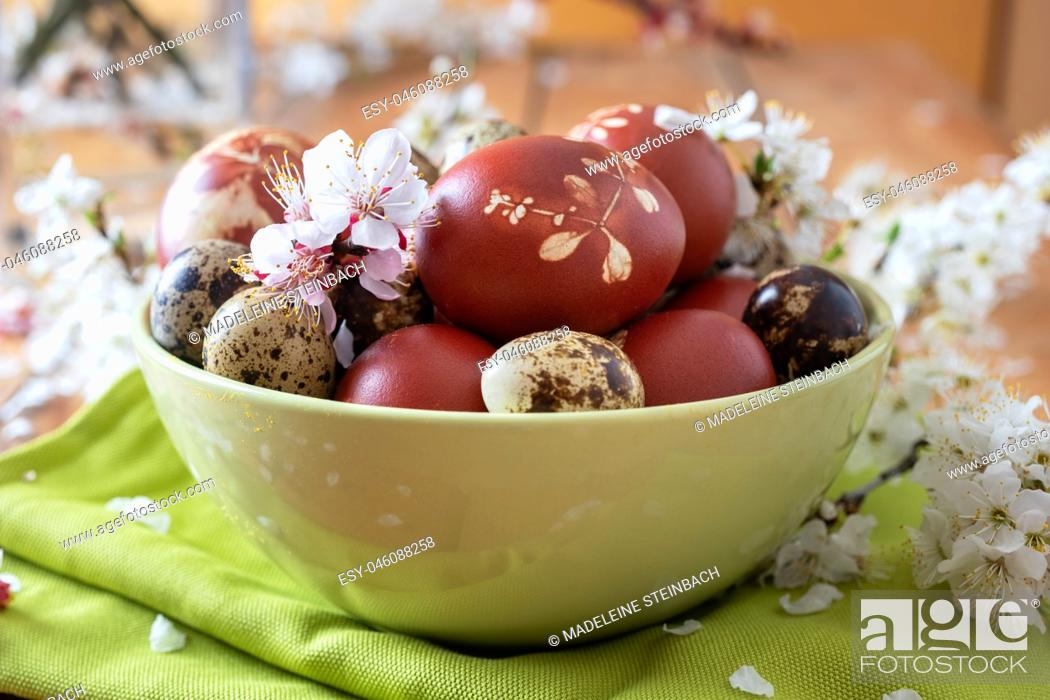 Stock Photo: Quail and Easter eggs dyed with onion peels with a pattern of fresh herbs in a green bowl with cherry blossoms.