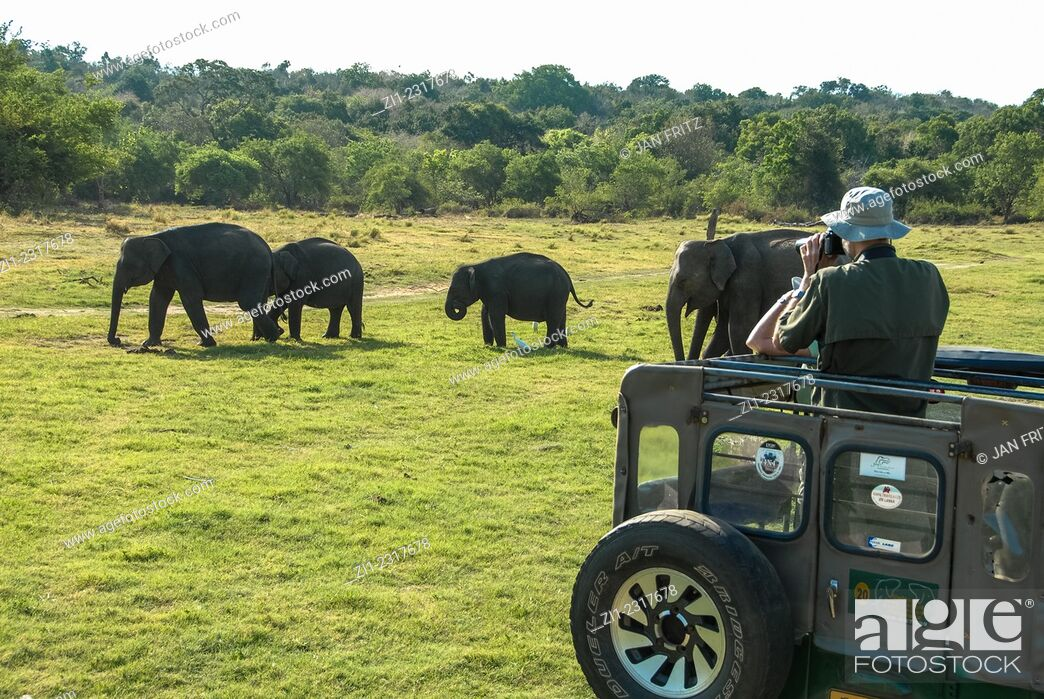 Stock Photo: Tourists in jeeps looking at elephants in minneriya national park, sri lanka.