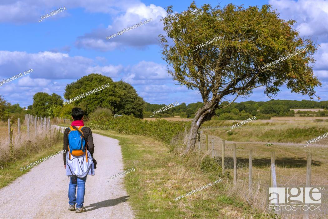 Stock Photo: Walkway and Bikeway Bourgenay-La Guittière through Payré Estuary and the Salt Marsh. Talmont-Saint-Hilaire, Sables-d'Olonne District, Vendée Department.