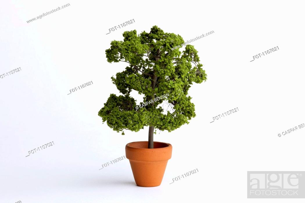 Stock Photo: A miniature potted plant.