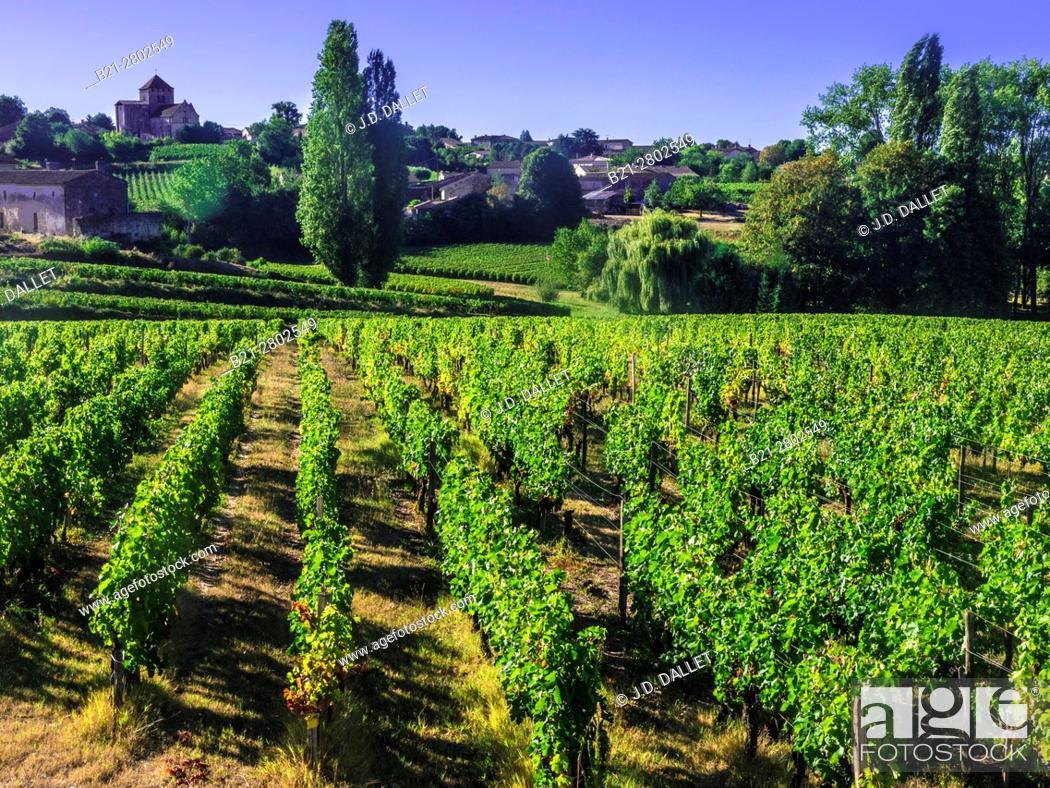 "Stock Photo: France, Aquitaine, Gironde. """"Montagne Saint Emilion"""", one of the famed Bordeaux wunes district."