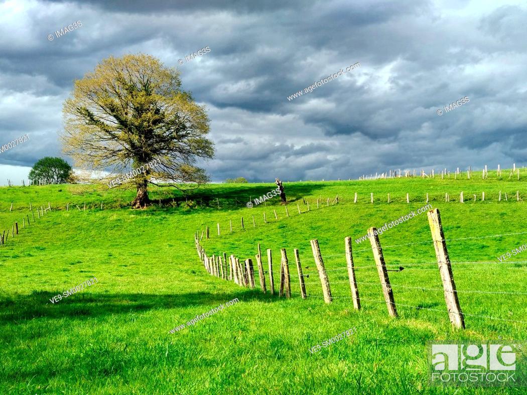Imagen: Meadows near Nava village, Asturias, Spain.