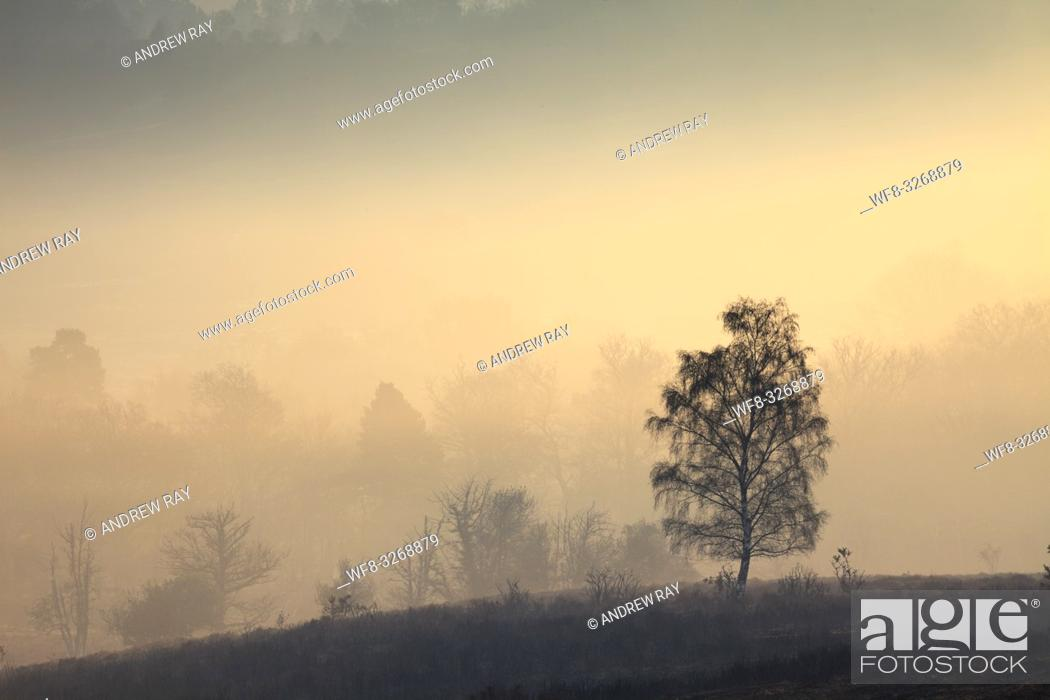 Imagen: Tree's on the northern slopes of Mogshade Hill in the New Forest National Park, captured at sunrise on a misty morning in mid April.